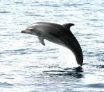 delfino1.JPG